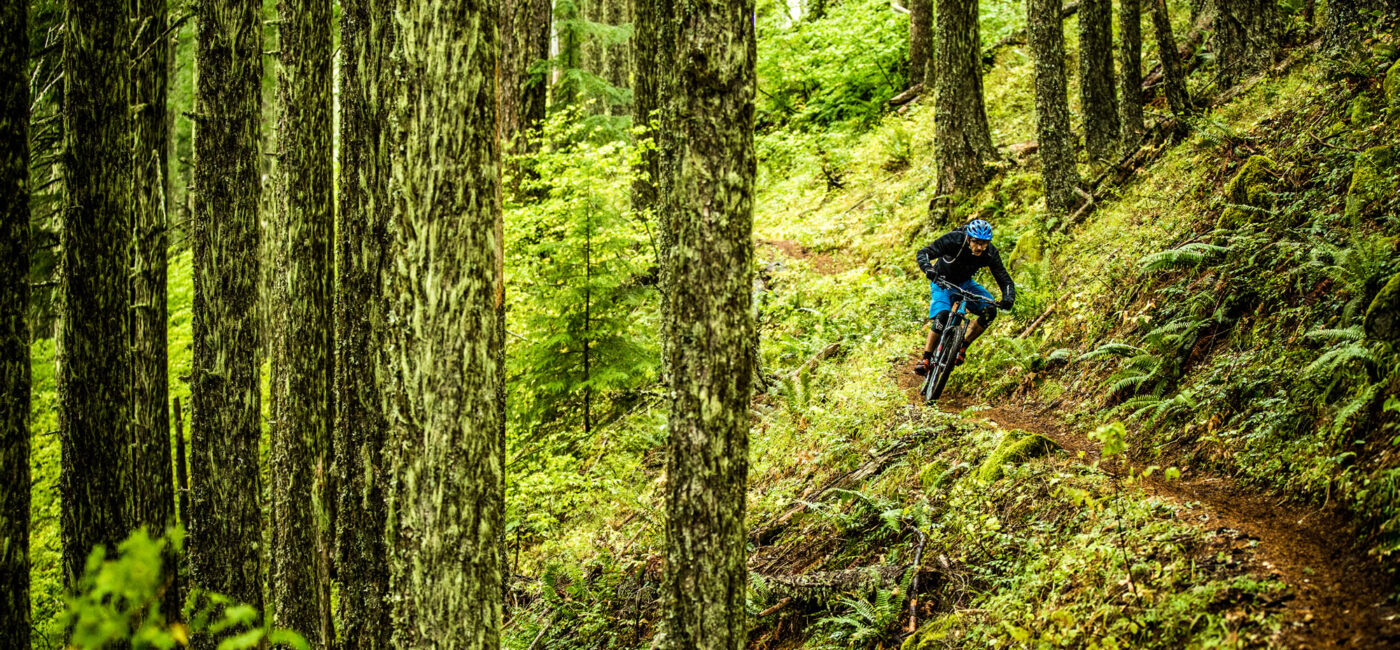 McKenzie River mountain bike tours